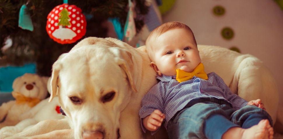 ترس از حیوانات کودکان