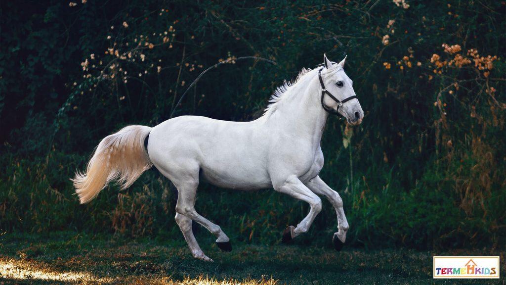 horses Termeh Kids 2 1024x576 - کودکان را با اسبها آشنا کنید!