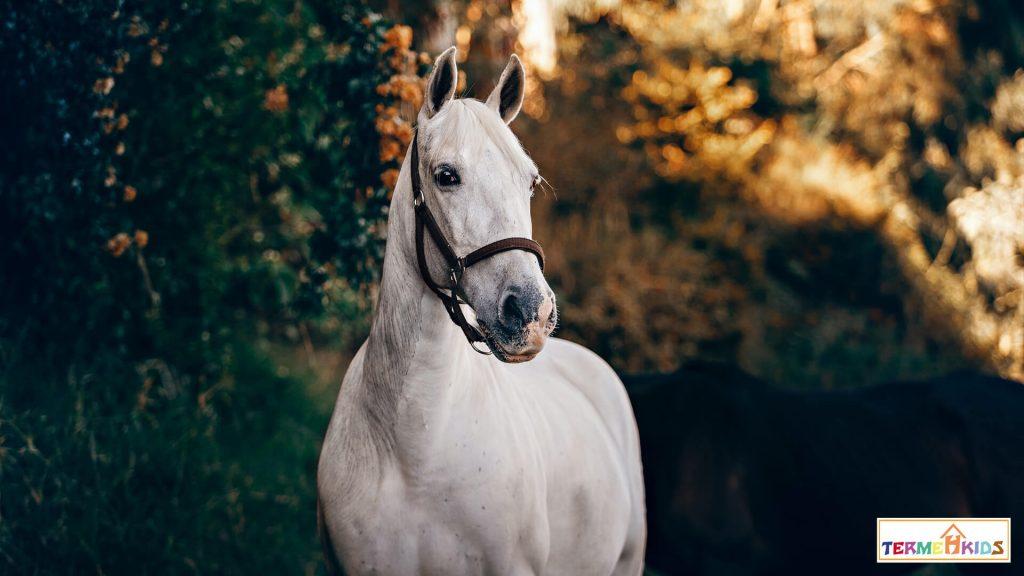 horses Termeh Kids 3 1024x576 - کودکان را با اسبها آشنا کنید!