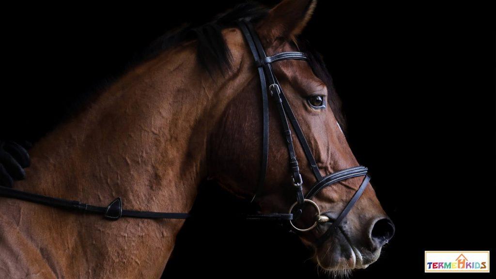 horses Termeh Kids 4 1024x576 - کودکان را با اسبها آشنا کنید!